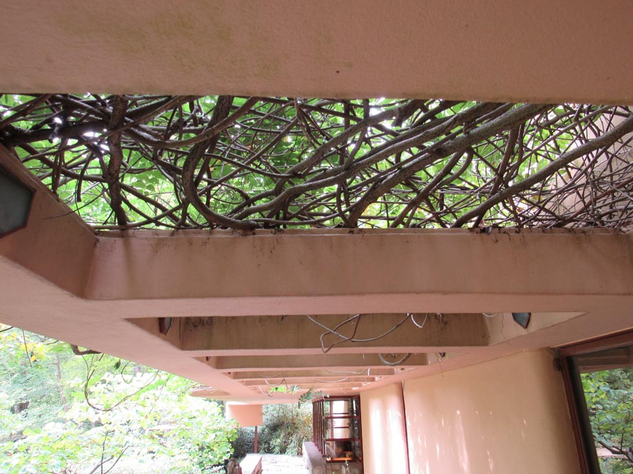Cantilevered roof and vines provide shade for the guest house.