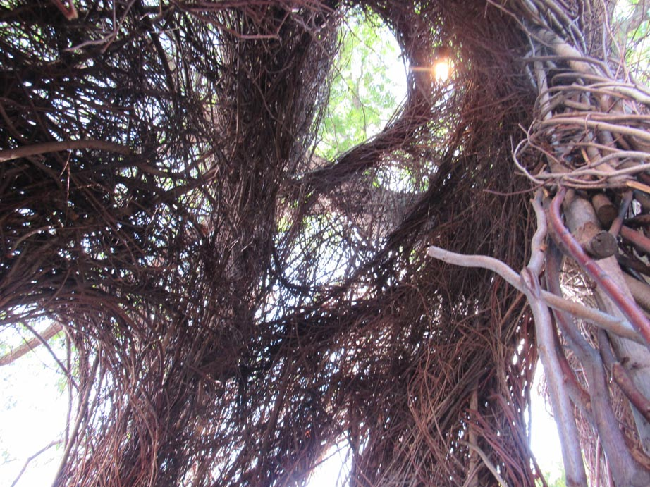 These structure are built by Patrick and 50 volunteers. They were cool and witches totally live in one of these, right?