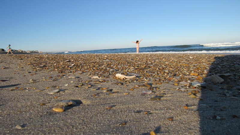 A new layer of shells were deposited every morning. We found a lot of shells but no spiral shells.
