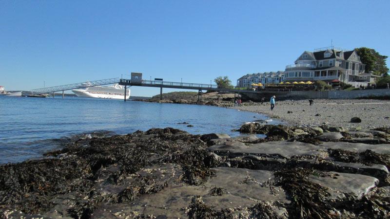 Low tide seaweed.