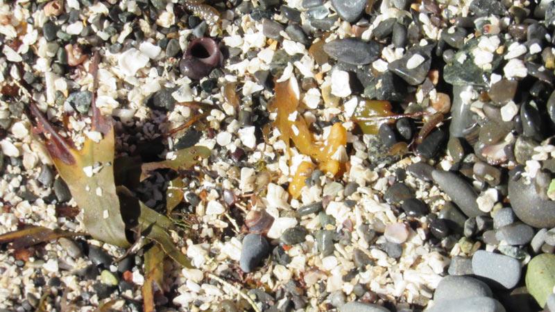 Low Tide Shells