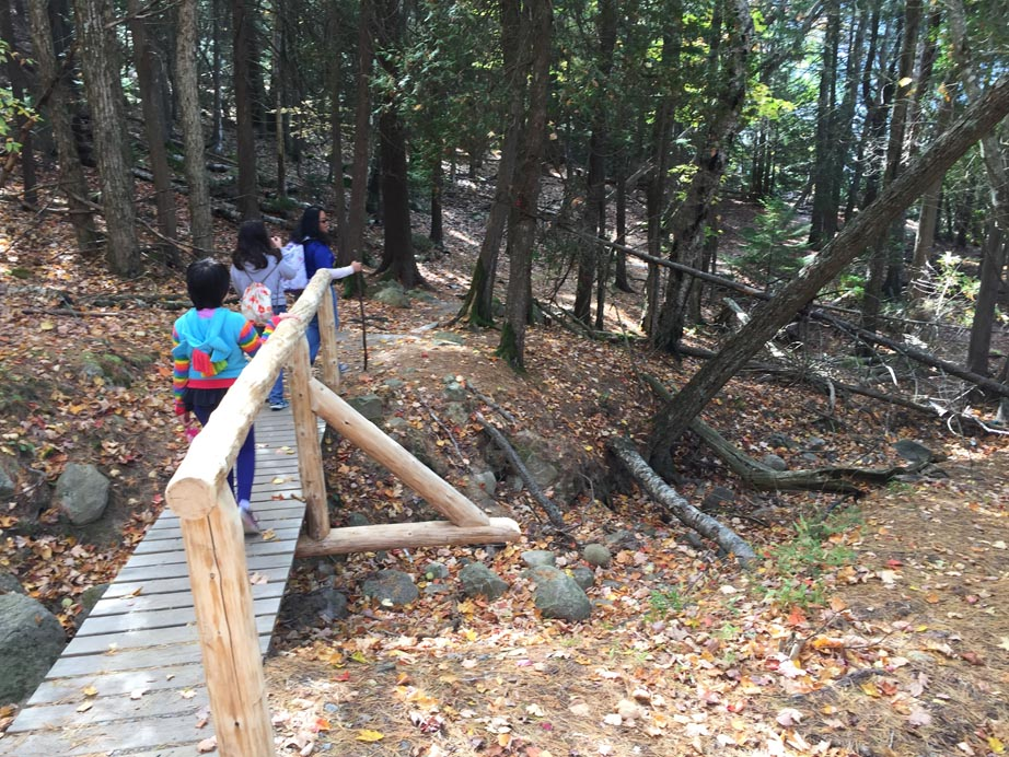 The friends of Acadia provide a lot bridges on the trails.