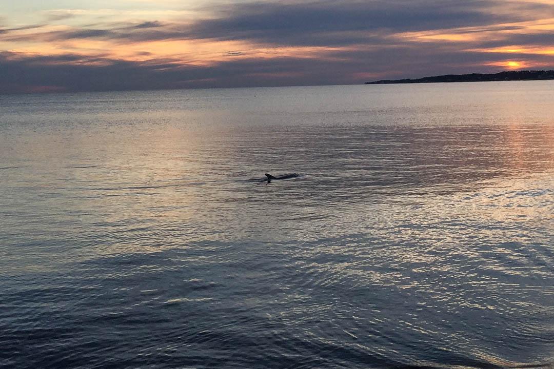 Carrabelle Beach, FL Dolphin Sunset