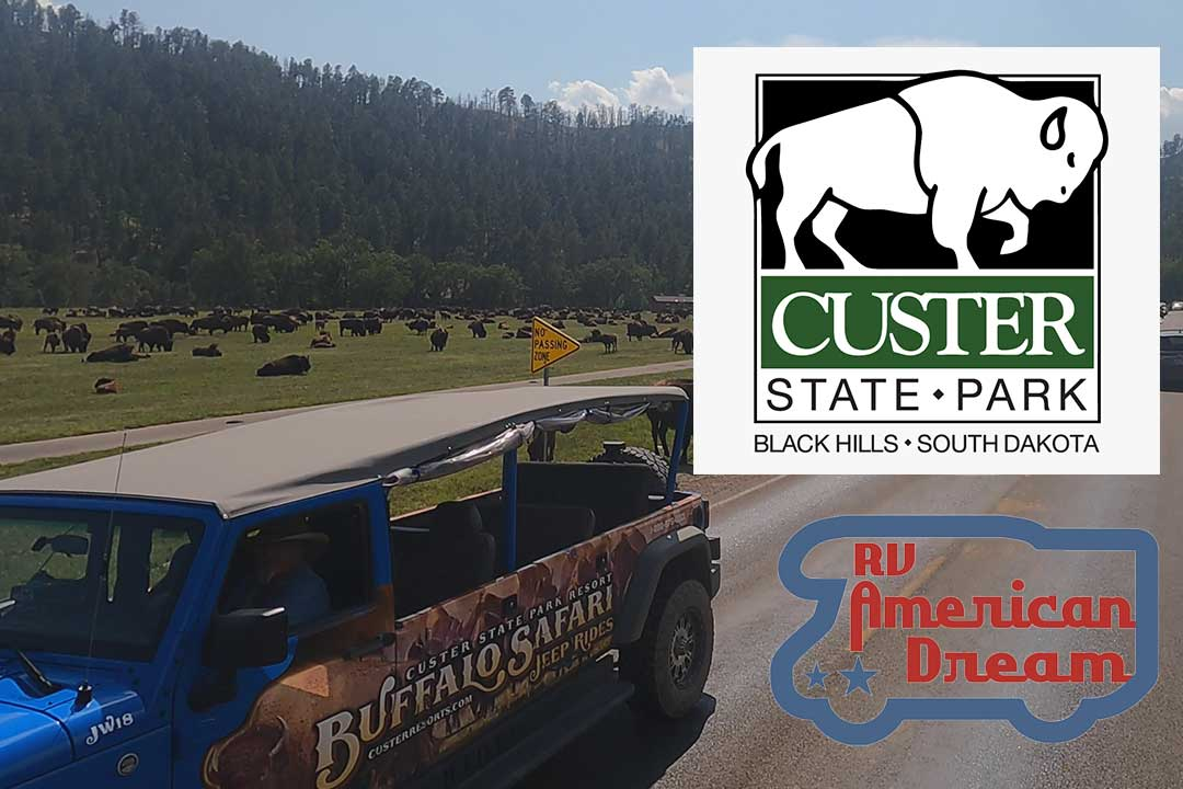 Custer State Park | So Many Bison